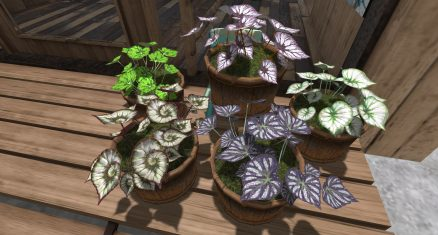 Plants, Trees & other Vegetation for gaming environments